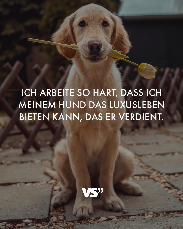 Hund Spruch